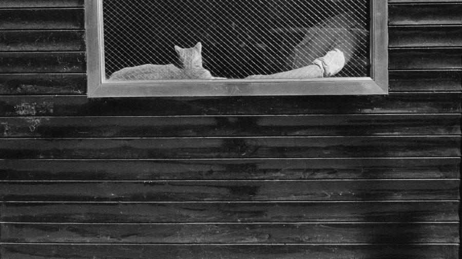 arm_cat
