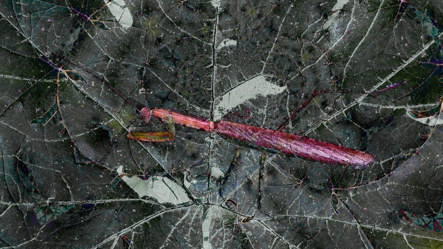 untitled_landscape-36